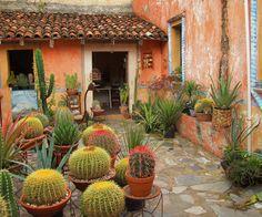 Cactus Gardner in Bernal, México art garden indoor plants Cacti And Succulents, Planting Succulents, Indoor Garden, Outdoor Gardens, Mexico Cactus, Mexican Garden, Cactus Plante, Xeriscaping, Cactus Flower