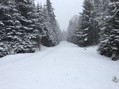 Snowmobile trail - Pittsburg, NH