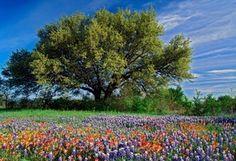 Весна, красиво, дерево, цветы