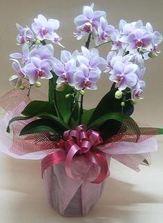 Indoor Orchids, Orchids Garden, Birthday Wishes Flowers, Valentines Flowers, Orchid Arrangements, How To Wrap Flowers, Flower Garden Design, Blooming Flowers, Kraut