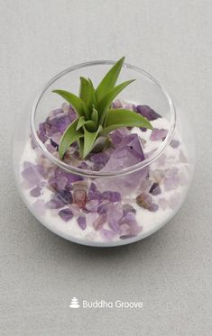 This charming little terrarium combines the healing vibes of plants with the unique properties of amethyst. Amethyst is a stone that encourages spiritual growth, wisdom, and tranquility. Because of the stone's ability to eliminate negative energy, having it in your home is said to be protective. #amethyst #DIYHomeDecorSpring