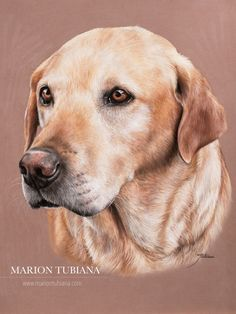 Pencil Portraits - Marion Tubiana - Discover The Secrets Of Drawing Realistic Pencil Portraits.Let Me Show You How You Too Can Draw Realistic Pencil Portraits With My Truly Step-by-Step Guide. Animal Paintings, Animal Drawings, Pencil Drawings, Horse Drawings, Portraits Pastel, Dog Portraits, Portrait Au Crayon, Pencil Portrait, Dog Artwork