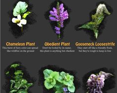 The Top 20 Invasive Plants to Keep OUT of Your Garden