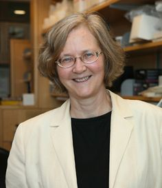 Elizabeth Blackburn (1948 - present) discovered the enzyme telomerase and won the 2009 Nobel Prize in Medicine