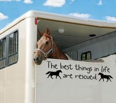 The best things in life are rescued horse decals by tawnyamdesigns, $3.50