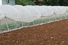 Caterpillar tunnel-inexpensive variation on a hoophouse
