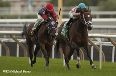 Conquest Typhoon draws away in the Summer Stakes. Paulick Report. 9/13/14