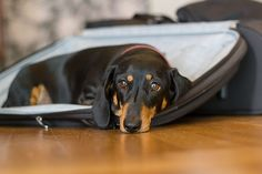Elfi and the suitcase | Flickr - Photo Sharing!