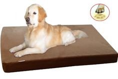"""The Largest 55""""X47""""X4"""" Extra Large Jumbo XXXL Orthopedic 100% Memory Foam Pad Pet Bed for Large Dog with durable brown denim cover + Waterproof case + Free Bonus Cover 55XCPX dogbed4less http://www.amazon.com/dp/B00K027D0S/ref=cm_sw_r_pi_dp_h9GNtb05G64BDFC7 This may be the one! I just wish it were thicker, like 6-8"""" rather than 4"""