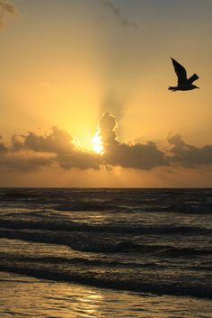 ~~Morning Glory ~ the sun erupts in a blaze of glory as all God's creatures stir... glorious beach sunrise, Galveston Island, Texas by Ron Wooten~~