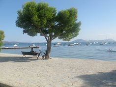 Pine Walk, Puerto Pollensa. Love this place, lived here for 6 months....so want to go back!