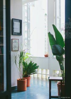 04-decoracao-ladrilho-hidraulico-azul-varanda-plantas