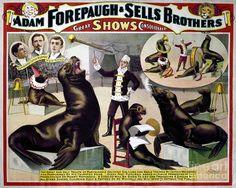 Circus Poster, C1898 Photograph  - Circus Poster, C1898 Fine Art Print