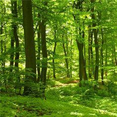 vindusfolie-skog-02