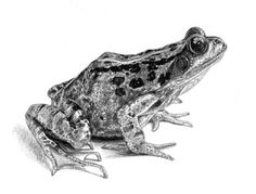 frog-in-pencil-pen.jpg 800×610 pixels