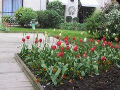 jardincito Avenue Montaigne: lindos tulipanes Marrakech, Athens, Tulips, London