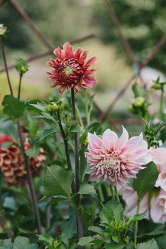 In the spring of 2014, I posted on my old blog that 2014 would be the first  year my entire garden would be outside the fenced area of our farm. The  previous fall I had handed over my last plot of fenced land to the other  farmers and expanded the large perennial garden outside our house that I