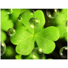 St Patricks Day Wallpaper Top 20 ❤ liked on Polyvore