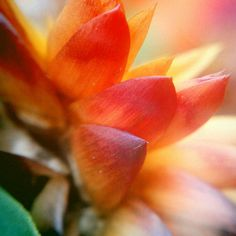 Macro flowers. By Sara Etten