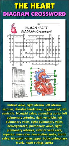 Help students learn and remember the parts of the heart using this diagram crossword.  BONUS ACTIVITY:  When they've completed the crossword, get them to cut out the diagram, glue it on a separate page and label the parts of the diagram.  This activity would work wonderfully within an interactive notebook as well. It can function as an assessment of learning, or it can serve as another reinforcement activity. Afterwards, they have a handy labeled diagram to help them review.