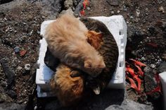 Istanbul wouldn't be the same without its cats - by @rubenmardom