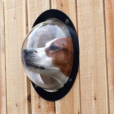 The Pet's Observation Porthole