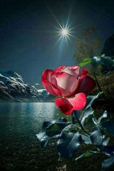 a nw p Beautiful Flowers Pictures, Beautiful Rose Flowers, Beautiful Moon, Pretty Pictures, Flower Images, Flower Pictures, Beautiful Nature Wallpaper, Beautiful Landscapes, Cool Optical Illusions