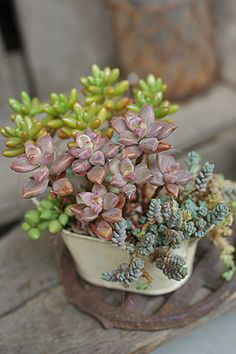 I wish I could keep plants alive. I would love to have these.