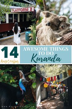 An inspiring travel guide detailing 14 awesome things to do in Kuranda, Australia. Discover the best Kuranda attractions, activities and ideas for what to do during your visit to this beautiful Tropical North rainforest village. Things To Do, Good Things, Awesome Things, Australia, Travel Guide, Tropical, Activities, Fictional Characters, Blog