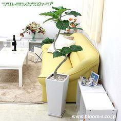 幹が綺麗なスパイラルに仕立てられた珍しいウンベラータです。インテリアとしてとってもオシャレな樹形をしています。ウンベラータの花言葉は、すこやか、夫婦愛、永久の幸せ http://www.bloom-s.co.jp/fs/bloomingscape/g9-unbesw  #観葉植物 #インテリア #ウンベラータ #foliageplant #interior #plants#umbellata