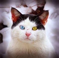 https://www.google.com.br/search?q=1/4 heterochromia
