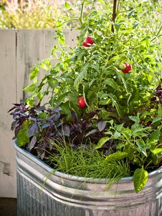 Growing Tomatoes In Pots One-pot garden A watering trough becomes a great planting bed. Container Herb Garden, Container Gardening Vegetables, Container Plants, Garden Pots, Vegetable Gardening, Container Homes, Garden Bed, Tips For Growing Tomatoes, Growing Tomato Plants