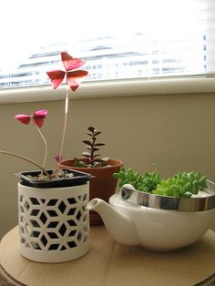 Tiny plants by hnxing, via Flickr