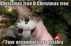 Are you looking for funny Merry Christmas memes? This year, super charge the holiday with 100 funny memes that will make your Christmas every more joyful. Funny Merry Christmas Memes, Christmas Tree Quotes, Funny Christmas Tree, Merry Christmas Images, Christmas Cats, Christmas Humor, Christmas Pictures, Xmas Quotes, Merry Xmas