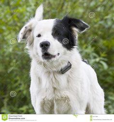 nolostdogs.org