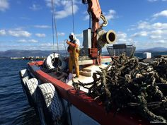 """Hoy viajamos a  """"Illa de Arousa"""" una isla a la que hasta 1.985 solo podía llegarse navegando.  Ese año un puente de casi 2 Kilómetros de longitud conectó la """"Illa"""" (isla en gallego) más grande de l…"""