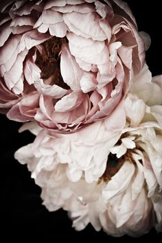 Sweet Dreams Peonies 2 Art Print by Regina Mountjoy. So Pretty!!