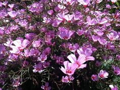 Annie's Annuals: The Ultimate Plant Road Trip - Want to be able to indentify plants with your mobile phone? Check out GardenAnswers.com!