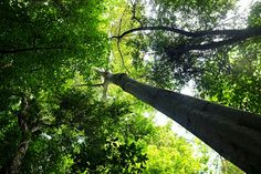 Tree tops, Tam Coco. August 2013.