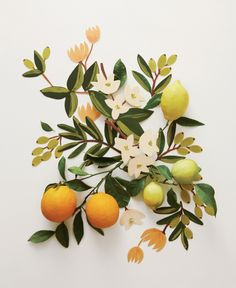 Rifle Paper Co Floral Illustrations mixed with real fruit - gorgeous!