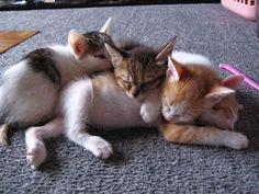 cat nap  ねむねむ…