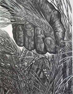 heart taking wood engraving by Angel Bracho .two things I like hands and wheat Woodcut Art, Linocut Prints, Art Prints, Gravure Photo, Engraving Art, Scratchboard, Arte Popular, Woodblock Print, Oeuvre D'art