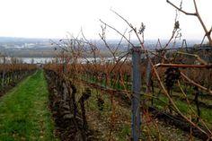 Im zweiten Teil der Weinbotschaft beschäftigt sich Peter Ladinig mit den Gründen, warum der Wein Wiens und auch die Stadt diesen hohen Stellenwert hat. Weinbotschaft. Wiener Wein, interessant? - http://www.dieweinpresse.at/ladinig-weinbotschaft-wein-wien-interessant/