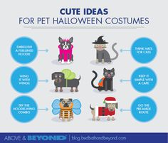 Don't forget pet Halloween costumes for your four-legged friends! If you just can't wait to dress up your furry pal, check out these creative options.
