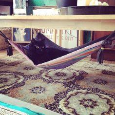 DIY magic carpet cat hammock