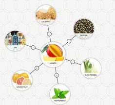 Some of mango's matches. You can create your own foodpairing tree on foodpairing.com  #food #foodpairing #foodstagram #mango #bulbfennel #peppermint #grapefruit #pepper #celeriac #gin Food Pairing, Celeriac, Mango Recipes, Food Science, Brainstorm, Fennel, Grapefruit, Peppermint, Create Your Own