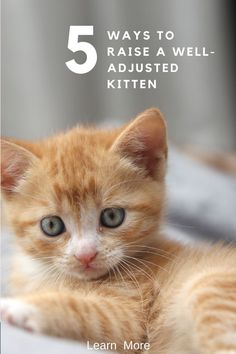 To help your kitten become the best cat he can be, it's important to give him a good foundation. In this post, learn 5 ways to give him a foundation that will help him become a well adjusted cat.