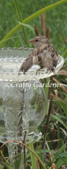 the little birds love the birdbath made from old glass dishes and containers http://www.craftygardener.ca/splish-splash/