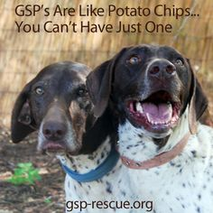 GSP's Are Like Potato Chips...You Can't Have Just One :)
