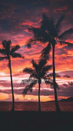 New Palm Tree Sunset Wallpaper Sun Ideas Tree Sunset Wallpaper, Ocean Wallpaper, Paradise Wallpaper, Mobile Wallpaper, Tumblr Wallpaper, Wallpaper Backgrounds, Iphone Backgrounds, Wallpaper Quotes, Sunset Pictures